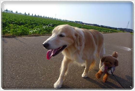 2014,8,12お散歩5