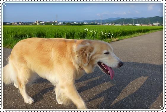 2014,8,12お散歩3