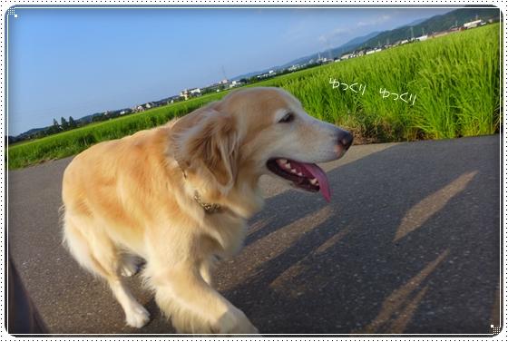 2014,8,12お散歩4
