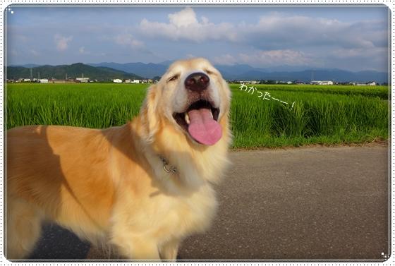 2014,8,12お散歩2