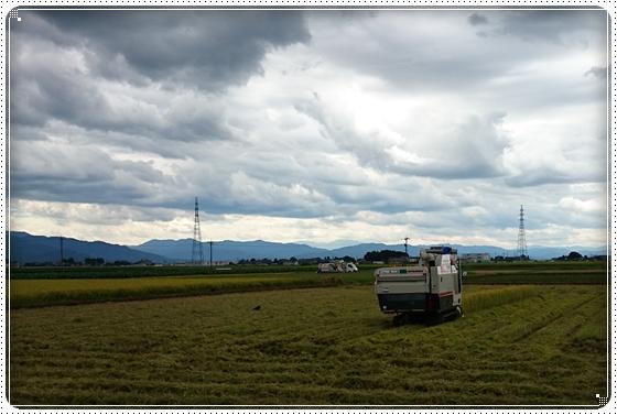 2014,8,22稲刈り1