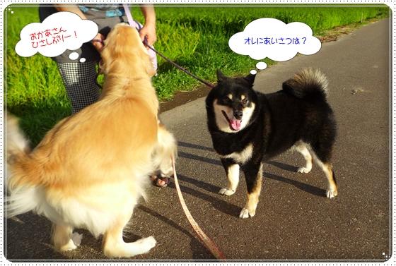 2014,8,26お散歩4