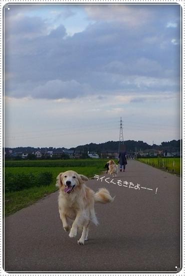 2014,8,27お散歩5