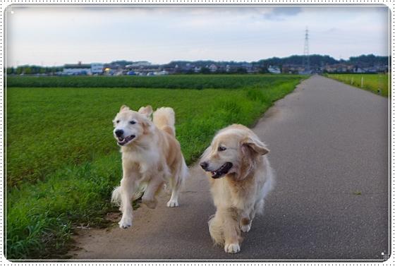 2014,8,27お散歩2