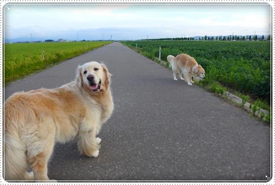 2014,8,27お散歩11
