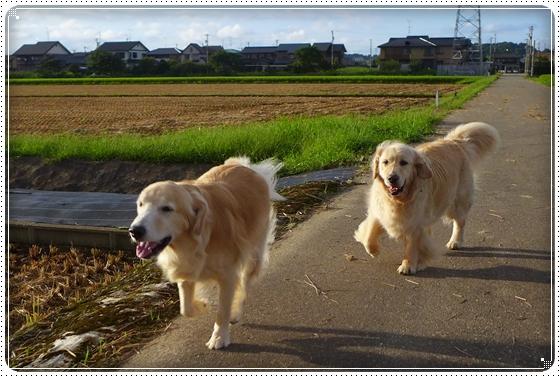 2014,8,28お散歩1