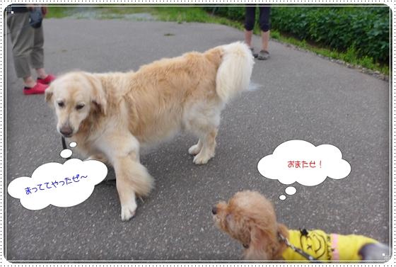 2014,8,29お散歩4
