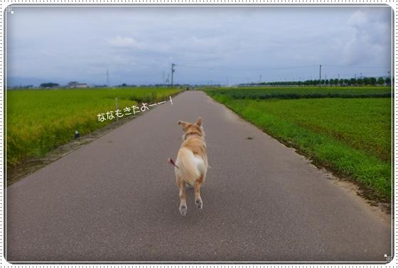 2014,8,29お散歩1