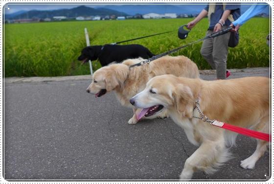 2014,8,29お散歩8