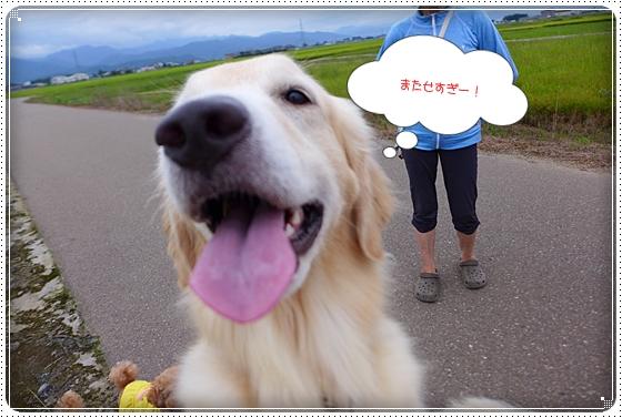 2014,8,29お散歩7
