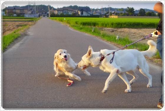 2014,8,30お散歩7