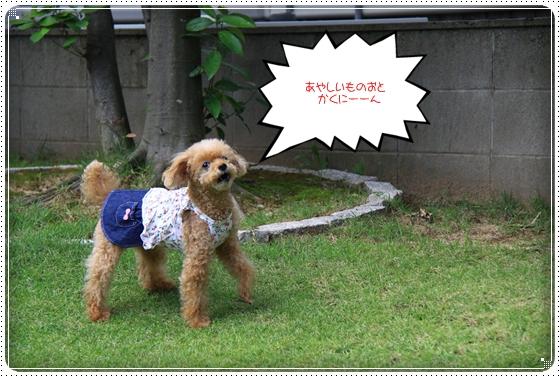2014,8,31お庭遊び3