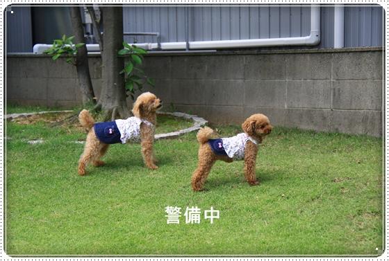 2014,8,31お庭遊び2