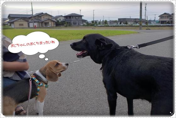 2014,9,3お散歩5