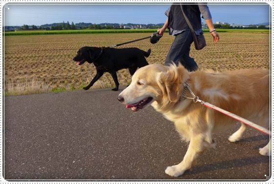 2014,9,3お散歩3