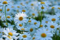 光と愛の感謝日記 直感を信じていますか?