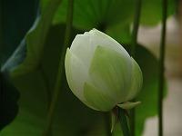 光と愛の感謝日記 今日できること(マザーテレサの日記から)