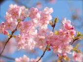 光と愛の感謝日記 2014年4月宮崎出張対面セッション募集のご案内