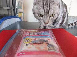 もて猫シート