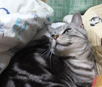 今日はここでモグラ猫1