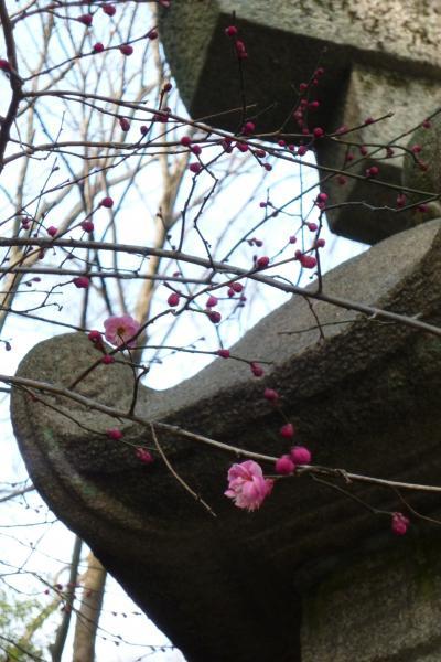 梅の花_convert_20140226213937