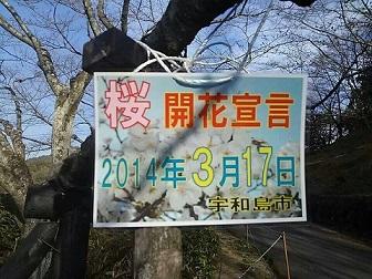 0318sakura.jpg