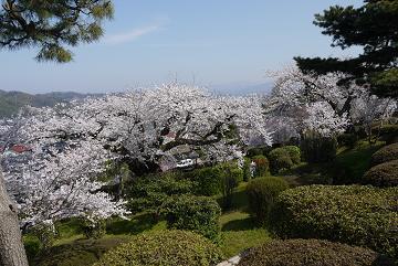 130405sakura2.jpg