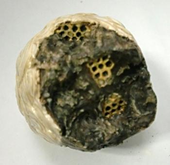 どんぐりメイルのアイルー4 ハチの巣