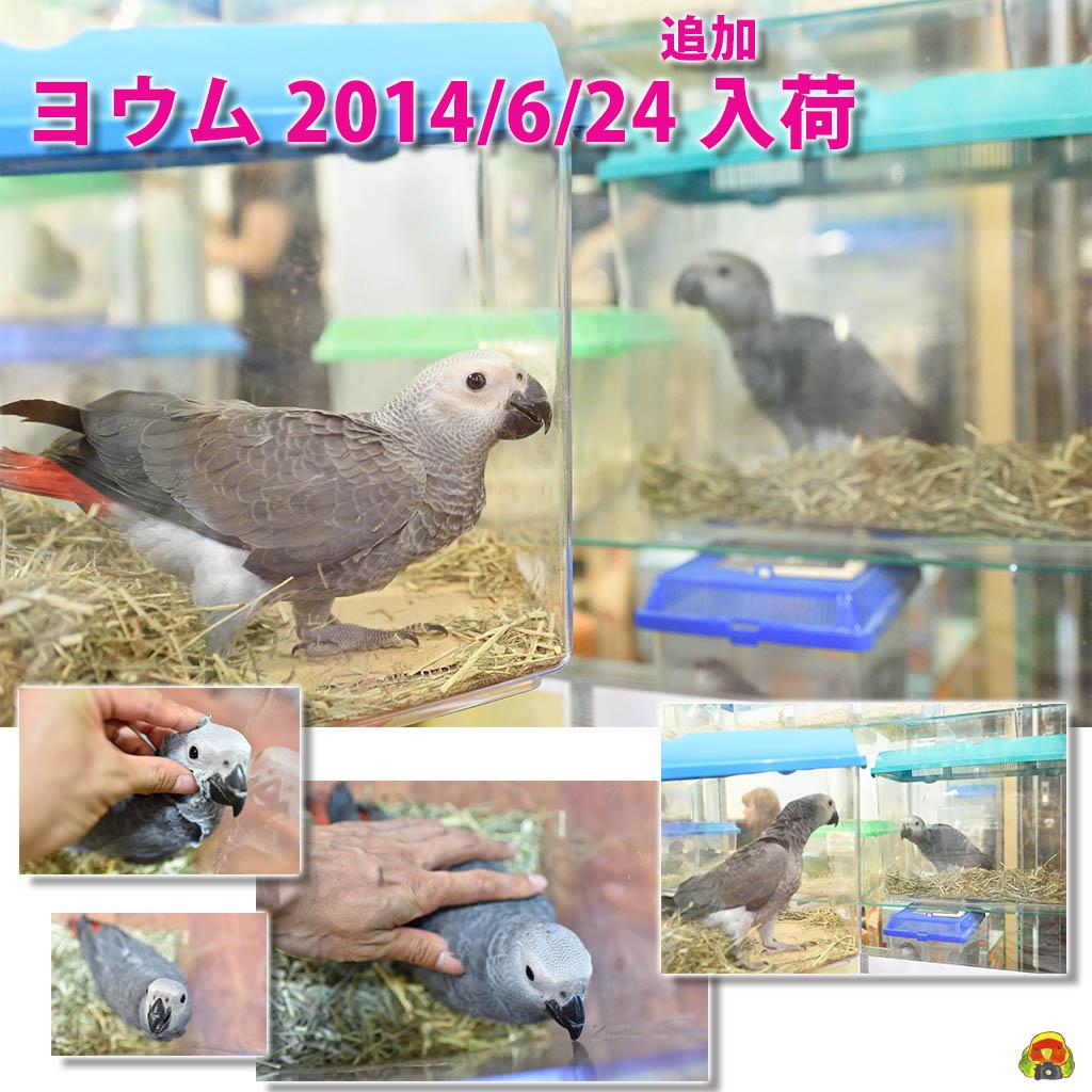 20140624_grey