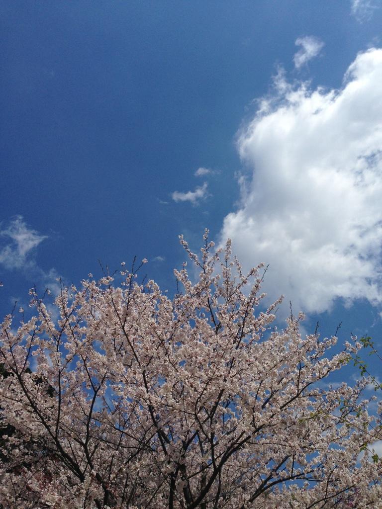20140406お花見
