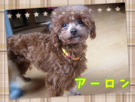 2014-06-11-11-26-39_deco.jpg