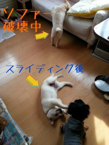 20140331164313b9a.jpg