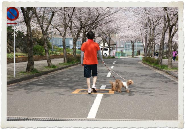 DSC06610-saku.jpg