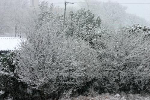 snow 201402142