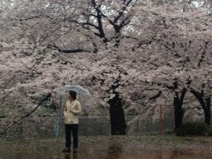 雨ざくら2 山縣有斗