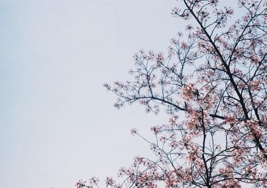 桜の季節でした♪