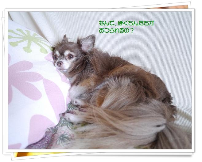 P1120304.jpg