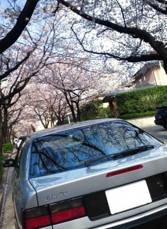 桜20140405_11R