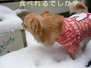blog2014021403.jpg