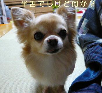 blog2014021905.jpg