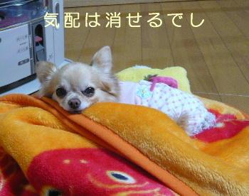 blog2014022001.jpg