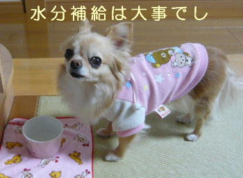 blog2014030509.jpg
