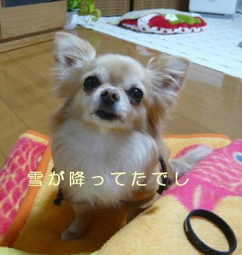 blog2014031005.jpg