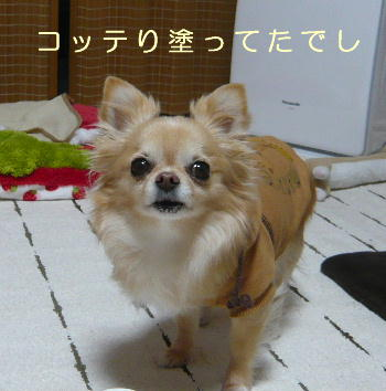 blog2014031103.jpg