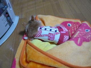blog2014040707.jpg