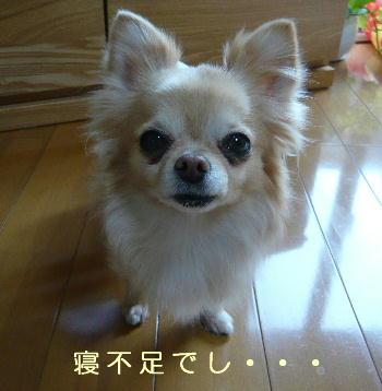 blog2014041905.jpg