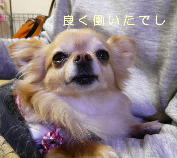 blog2014042506.jpg