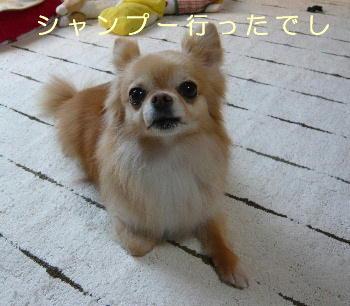 blog2014050303.jpg