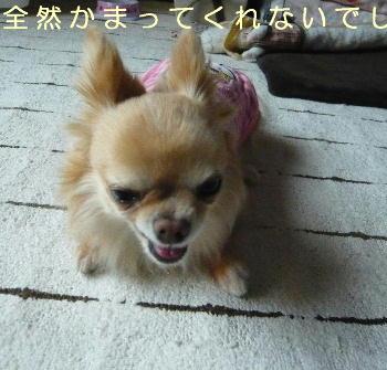blog2014051005.jpg