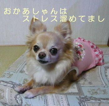 blog2014051305.jpg